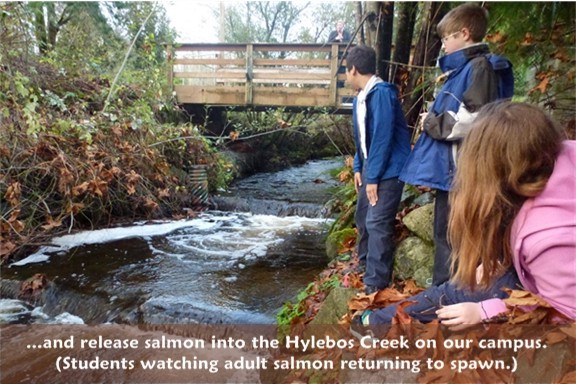 Ecology: we release salmon into the Hylebos creek