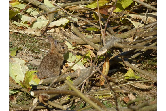 Wild life on our campus: Rabbit