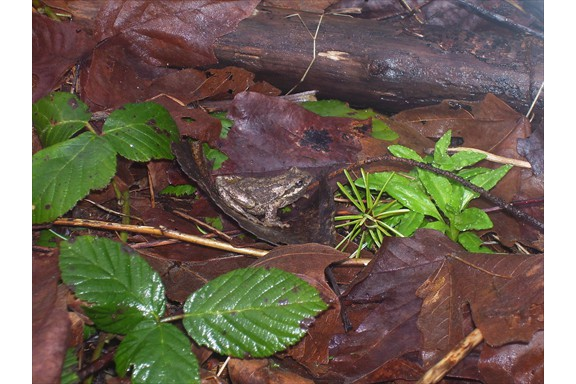Wild life on our campus: Frog camouflaged